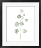 Framed Soft Eucalyptus Branch II