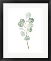 Framed Soft Eucalyptus Branch III
