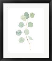 Framed Soft Eucalyptus Branch IV