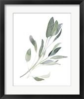 Framed Simple Sage I