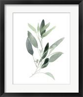 Framed Simple Sage III