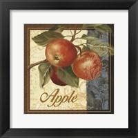 Framed Fruit Illustration I