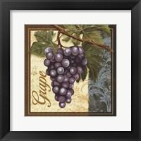 Framed Fruit Illustration II