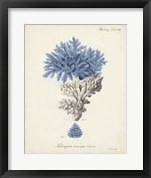 Framed Antique Coral in Navy III
