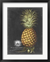Framed Royal Brookshaw Pineapple I