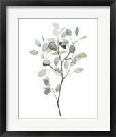 Framed Seaglass Eucalyptus I