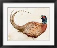 Framed Pheasantry I
