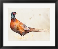 Framed Pheasantry II
