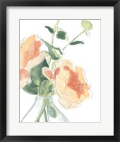 Framed Soft Posy Sketch IV