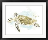 Framed Watercolor Sea Turtle Study II