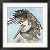 Framed Soft Brown Pelican II