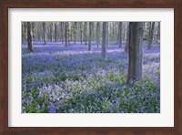 Framed Bluebell Dreams I