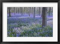 Framed Bluebell Dreams I