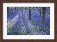 Framed Bluebell Dreams II