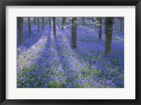 Framed Bluebell Dreams II
