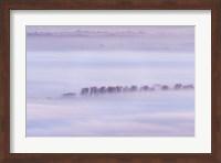 Framed Mist Ripples II