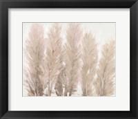 Framed Pampas Grass I