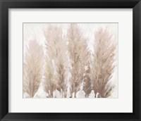 Framed Pampas Grass II