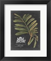 Framed Royal Foliage II