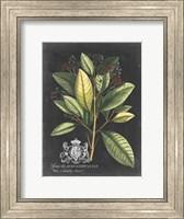 Framed Royal Foliage IV