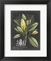 Framed Royal Foliage IV