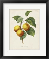 Framed Redoute's Fruit I