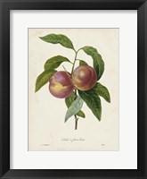 Framed Redoute's Fruit II