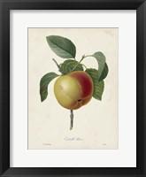 Framed Redoute's Fruit IV