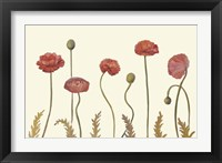 Framed Coral Poppy Display I
