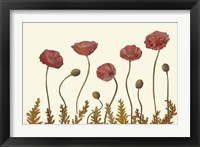 Framed Coral Poppy Display II
