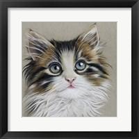 Framed Kitten Portrait II