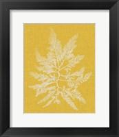 Framed Seaweed Pop II