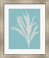 Framed Seaweed Pop IV