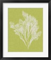 Framed Seaweed Pop V