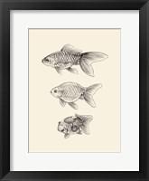 Goldfish IV Framed Print
