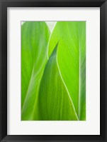 Framed Canna Leaf Close-Up 1