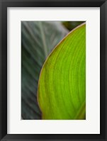 Framed Canna Leaf Close-Up 2