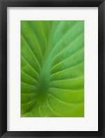 Framed Hosta Leaf Detail 3