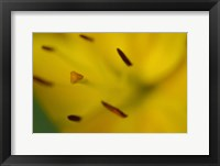 Framed Yellow Daylily Flower Close-Up 1