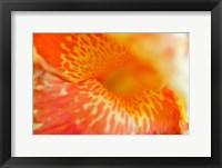 Framed Orange Canna Flower Detail