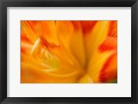 Framed Orange Daylily