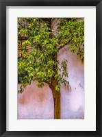 Framed Tree And Wall