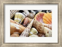 Framed Tropical Shell Still-Life 1