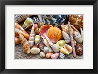 Framed Tropical Shell Still-Life 2
