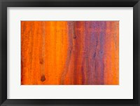 Framed Details Of Rust And Paint On Metal 5