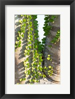 Framed Madagascar Spiny Forest, Anosy - Ocotillo Plants With Leaves Sprouting From Their Trunks