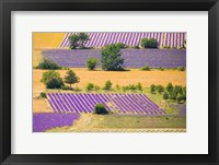 Framed France, Provence, Sault Plateau Overview Of Lavender Crop Patterns And Wheat Fields