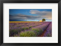 Framed France, Provence, Valensole Plateau Lavender Rows And Farmhouse