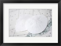 Framed Sand Dollars On Nautical Chart