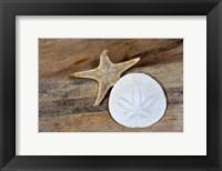 Framed Sand Dollar And Starfish Still-Life
